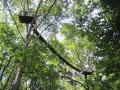 canopy.walkway