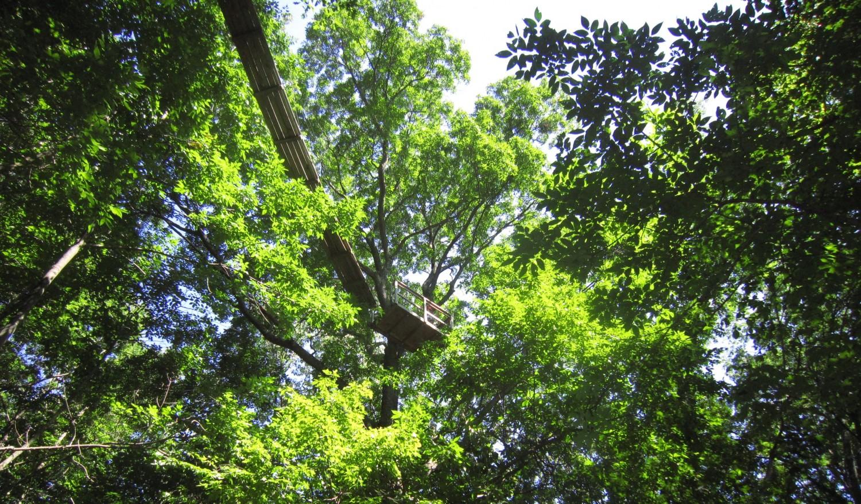nature camp canopy walkway